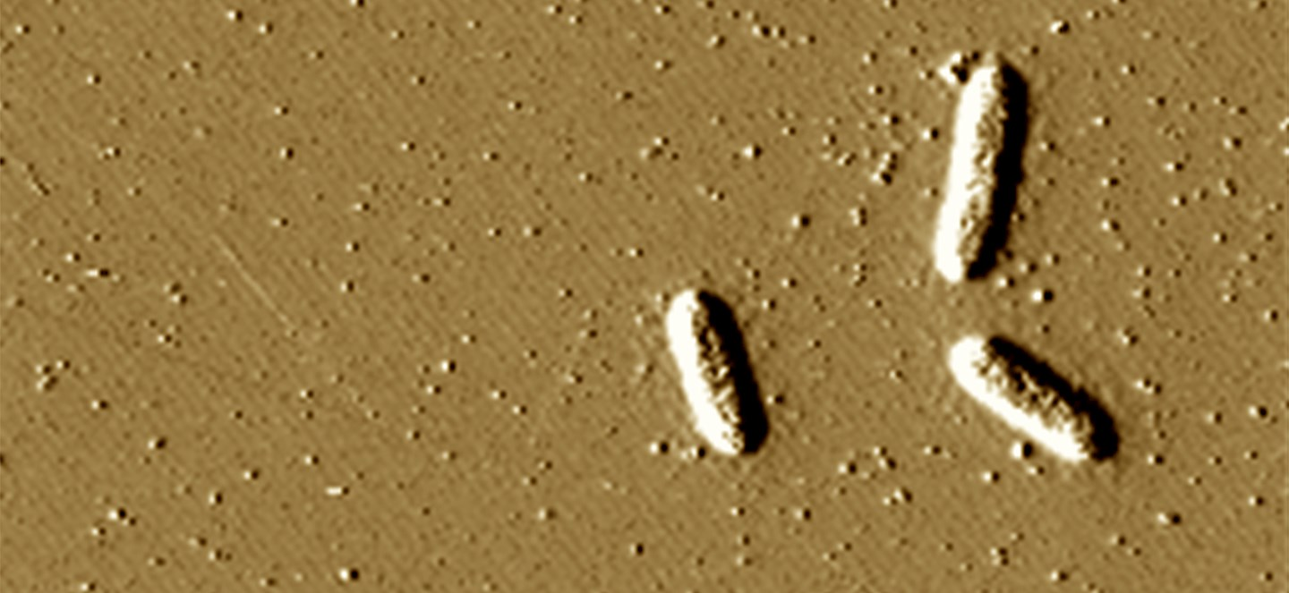Microscpic image of geobactor